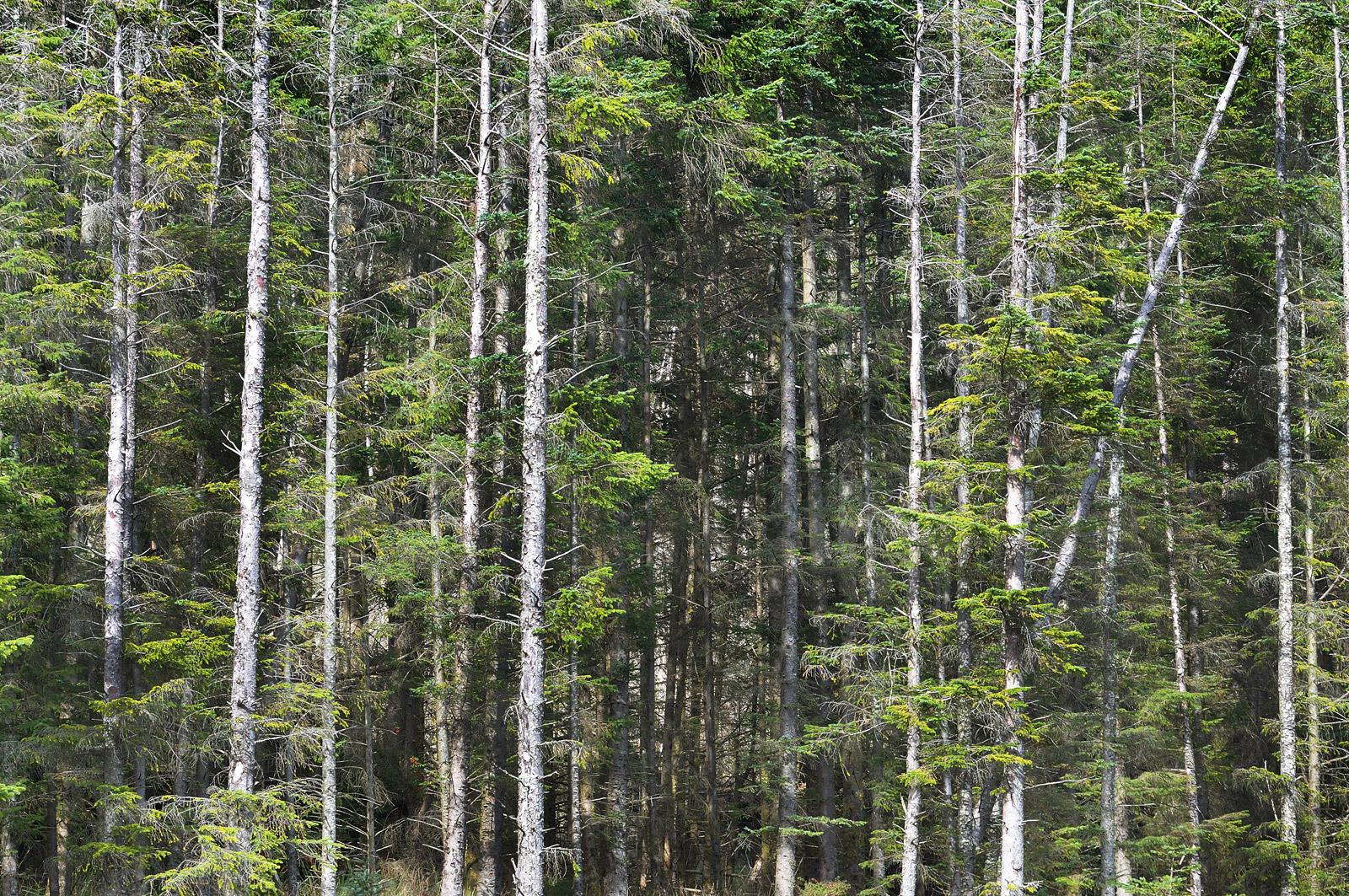 elgol-forest-skye